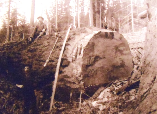 2 ROBERT ON A FALLEN TREE, SKAGIT COUNTY, 1906